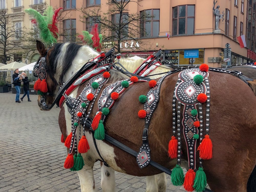 Elaborately decorated horse and carriage, Old Square