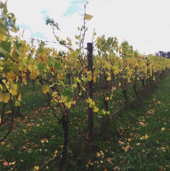 Melbourne Corporate Wine Tasting Wine Talks