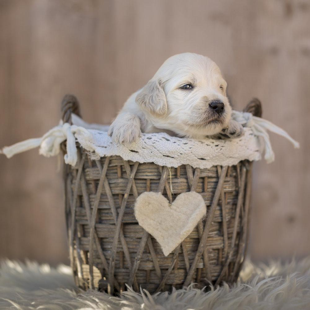 En hjertevenn venter på deg!