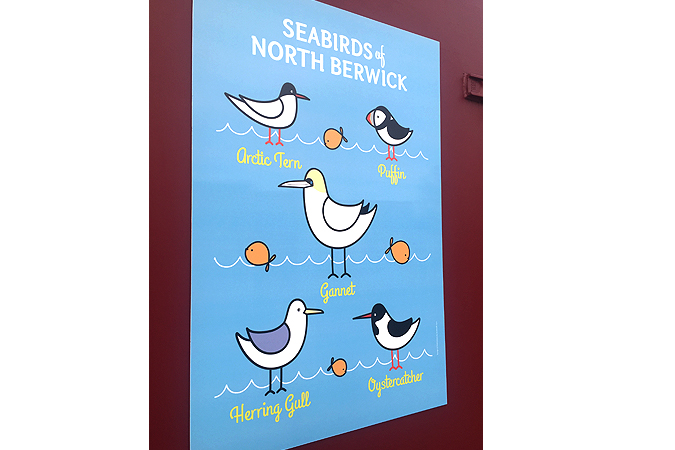 SeabirdsofNB.jpg
