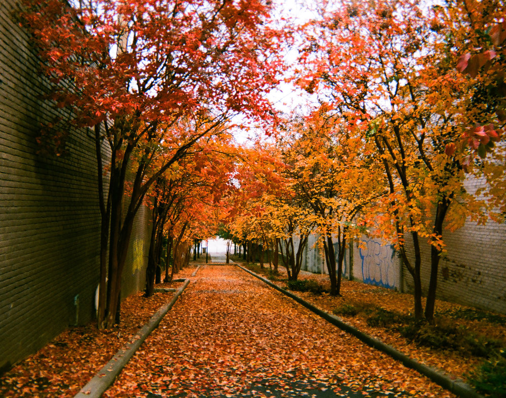 """Unforgiving Fall"" by Crystal Williams - Third Place Crystal took one of the most beautiful photos of the project as she captured this alley on a perfect Fall day. Voters loved that she found appreciation in the scene despite having slept there previously."