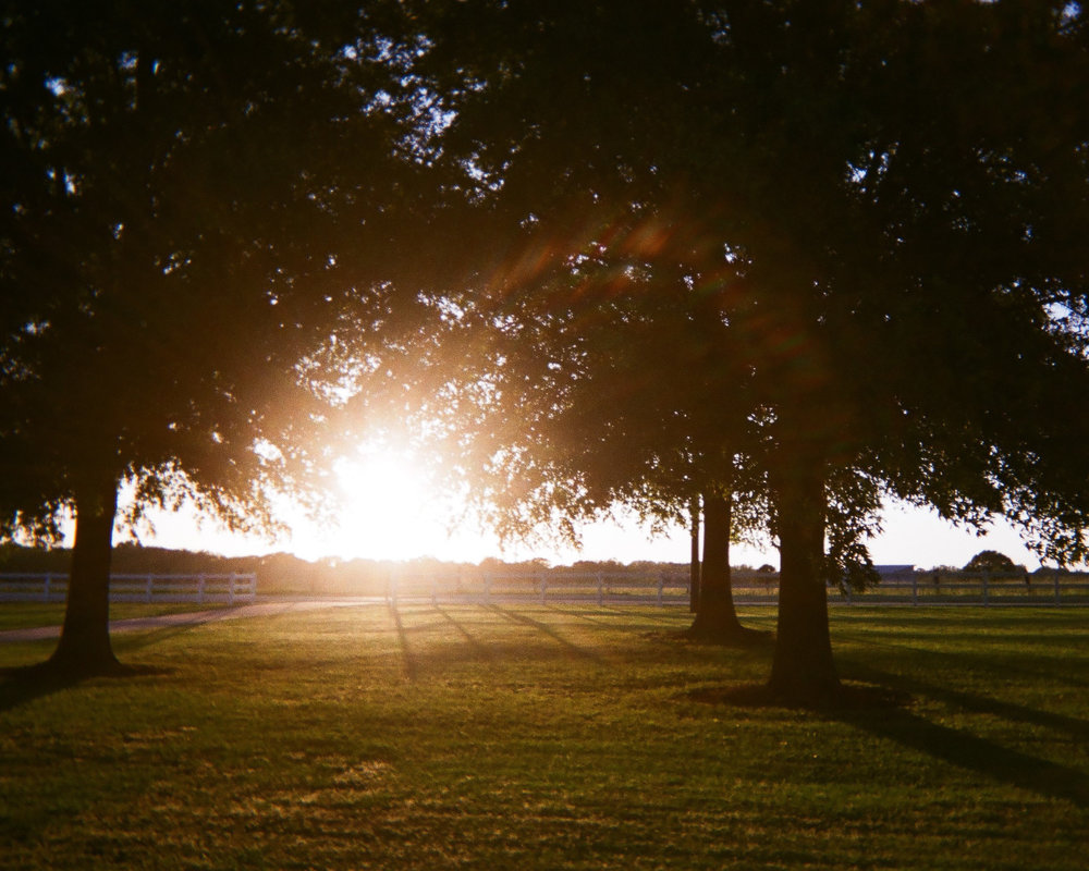 "Sunlight  by Toli Ewing   ""I liked the light. It's in my front yard."""