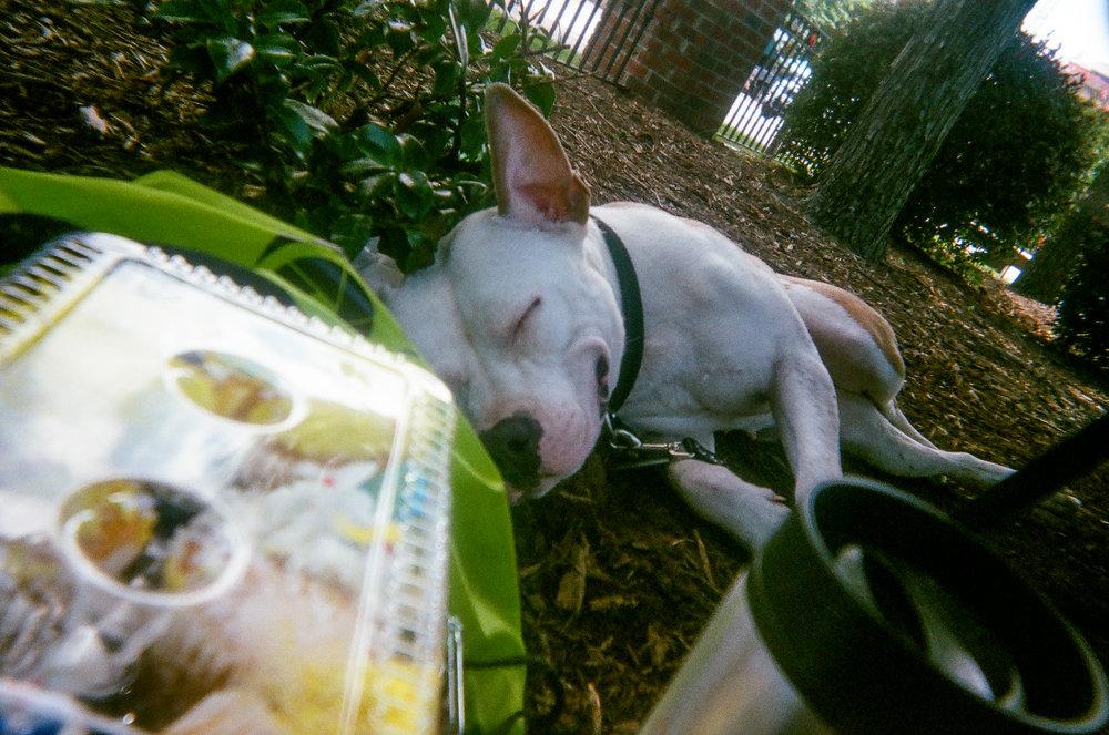 Dog Days of Summer by Roddrick Miller