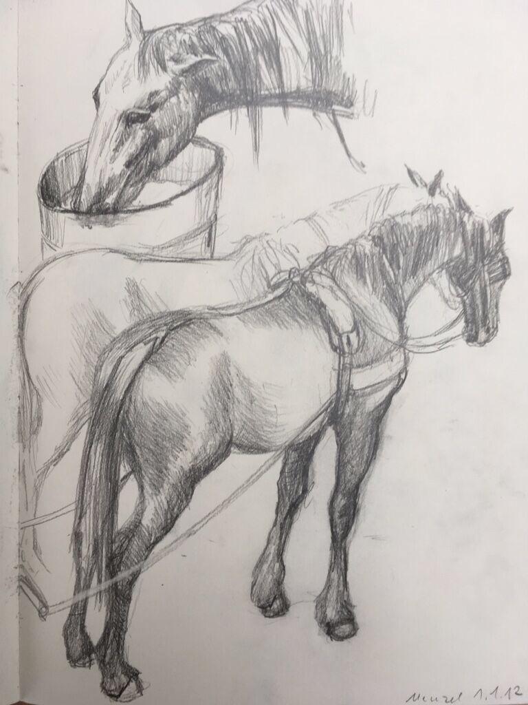 pferde.png
