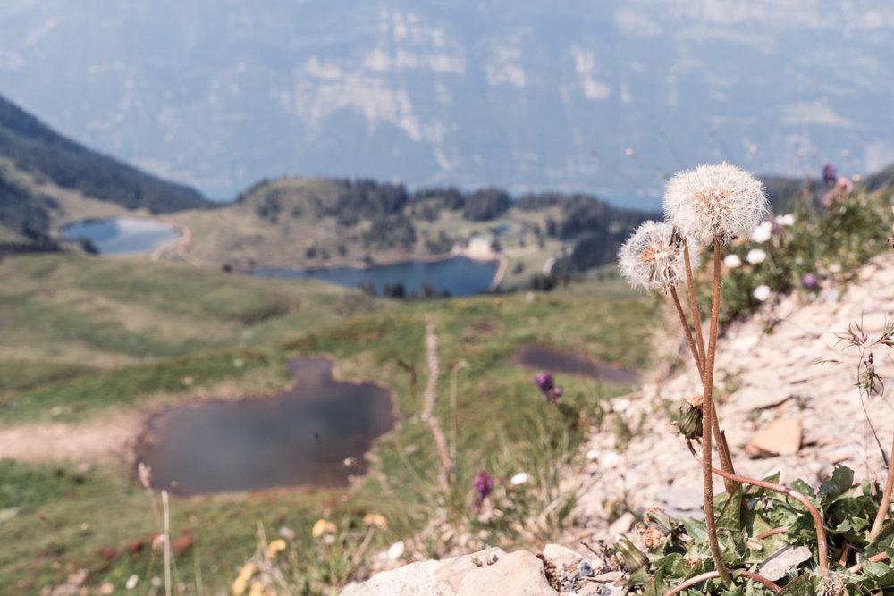 180701_fotokurs-bergwelten_a7r2-0014.jpg