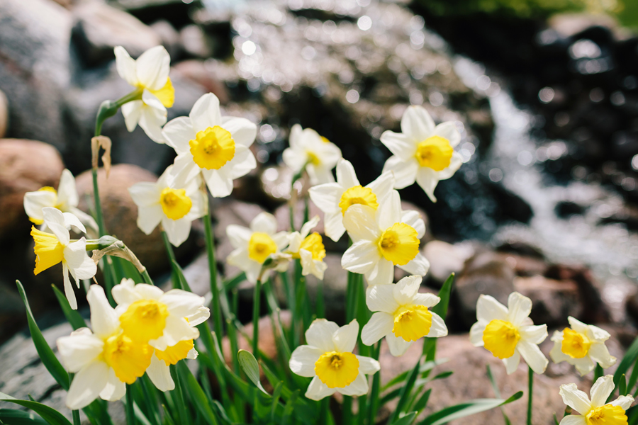 SpringWedding003.jpg