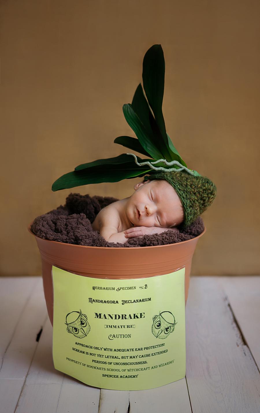 newbornboy13.jpg
