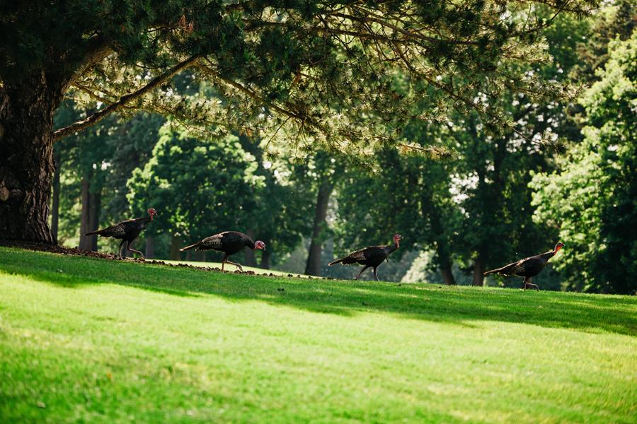 Kent Country Club Wedding114.jpg