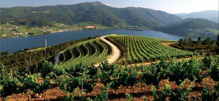 ribeiro_viticultura.jpg