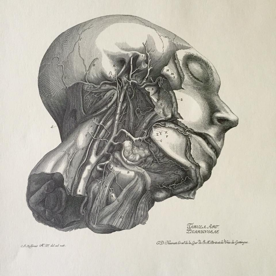 "Sketch by the Swiss ""father of modern physiology"" Albrecht von Haller"