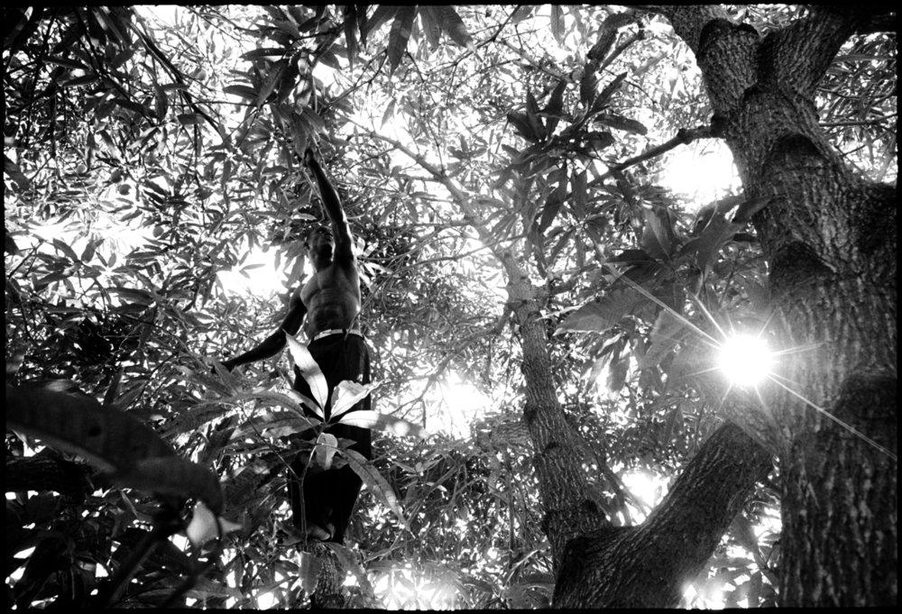 dawson in tree 2 copy.jpg