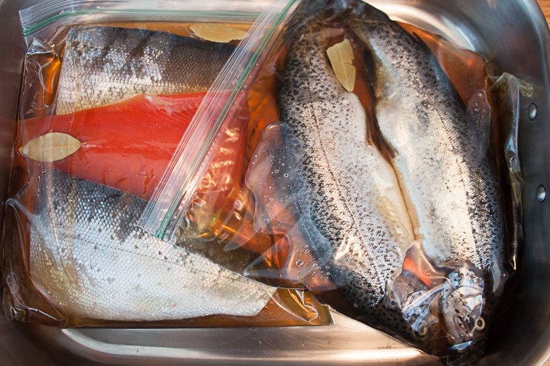 Brine Salmon & Trout for 24 hours in Fridge