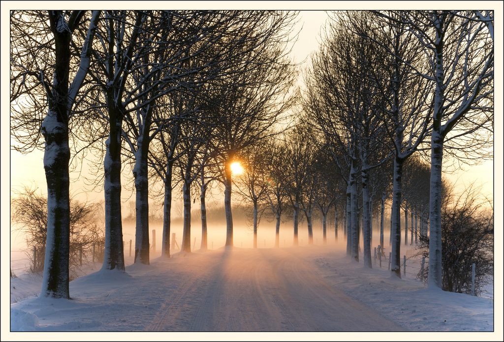 Misty winter afternoon