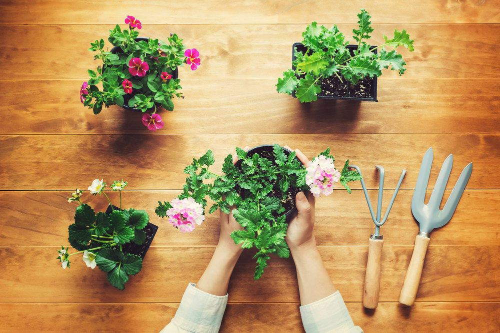 Subscription Box for Home and Garden Needs