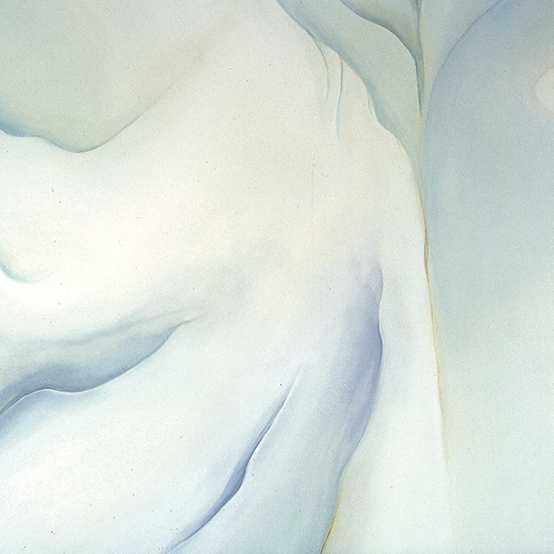 WHITE IRIS   40 x 40 inches, oil on canvas, 2000