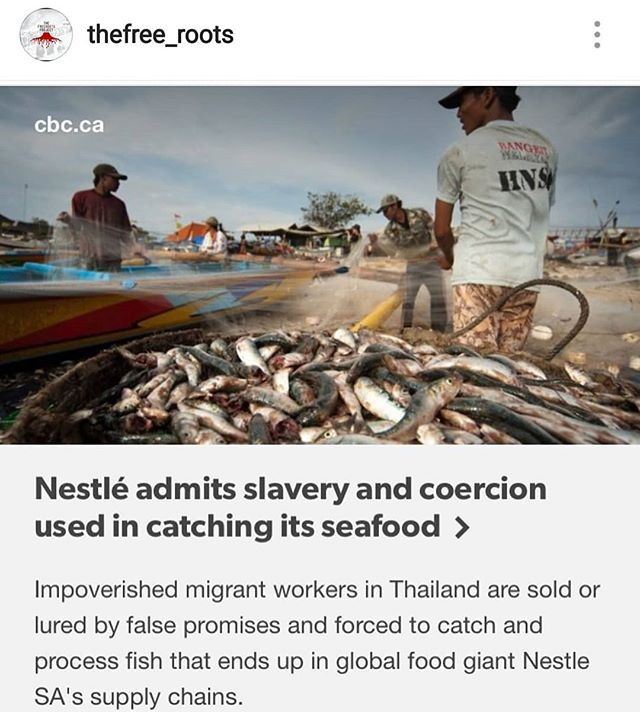If you weren't boycotting Nestle before... Rp from @thefree_roots  #nestle #boycottnestle