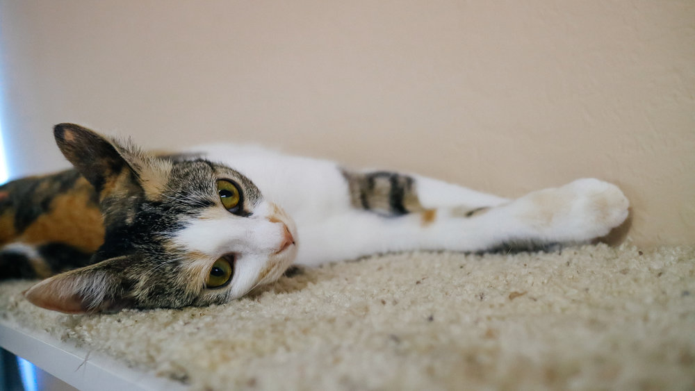 meow (2).jpg