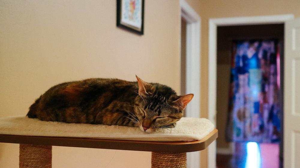 meow (4).jpg