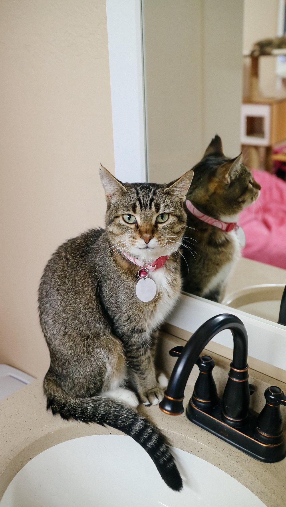meow (6).jpg