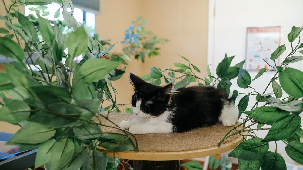 meow (7).jpg