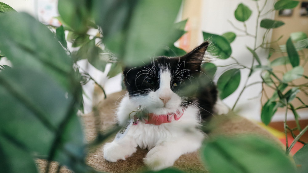 meow (8).jpg