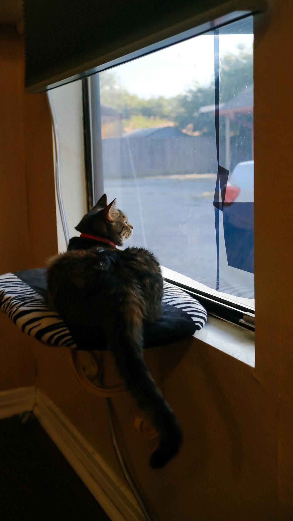 meow (10).jpg