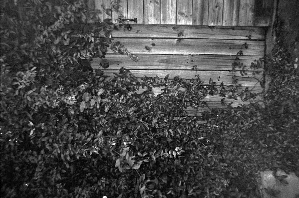 aiko page 3 wooden fence.JPG
