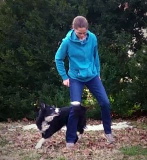 dog tricks, positive dog training, charlottesville, virginia, doggedly whole, dog training, clicker training