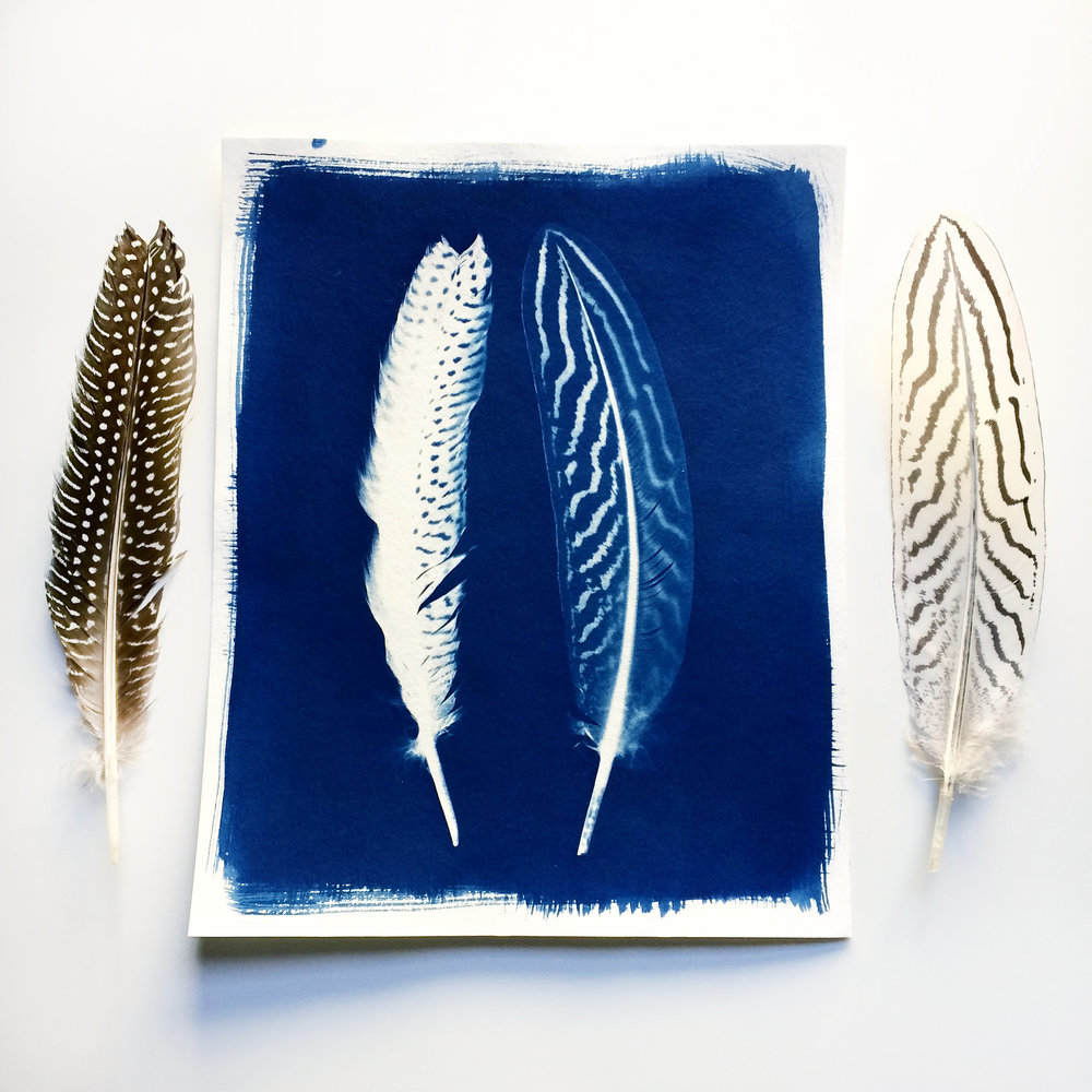 The original cyanotype print that I made with the two beautiful feathers that I used.