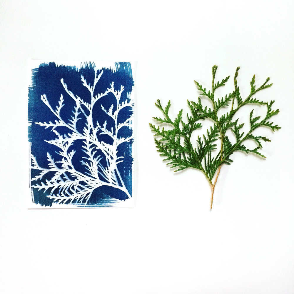Cyanotype of Evergreen Branch by Emma Freeman Designs