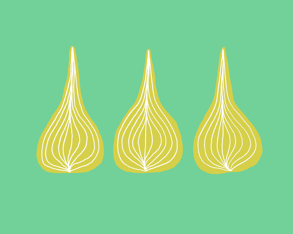 Onions Illustration by Emma Freeman Designs