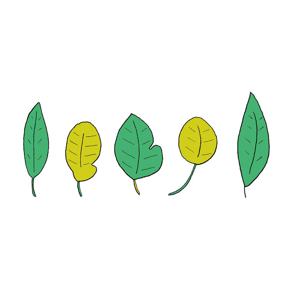 Little Delicate Leaves_square.jpg