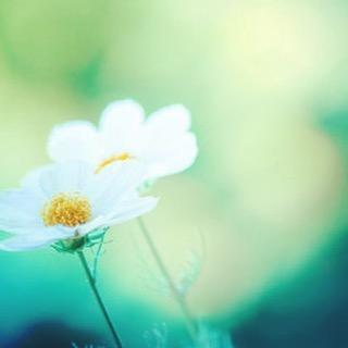 """""""I'm not lazy I just really enjoy doing nothing""""😎☀️🙏🏻 . . . #sundaymorning #lazysunday #meditation #meditatie #amsterdam #zondag #pinksteren #happysunday #yoga #healthyhabits #officeyoga #weekend #lazyweekend #naturelovers #relaxingsunday #chilling #zen #easylikesunday"""