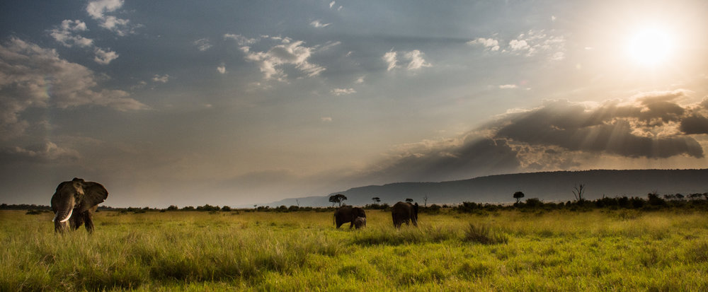 Elephant, Maasai Mara National Reserve, Kenya. Photo:   © Jon McCormack | Conservation International