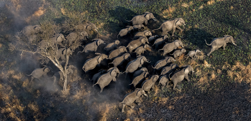 A herd of elephants near the Mara North Conservancy in Kenya.   © Jon McCormack | Conservation International