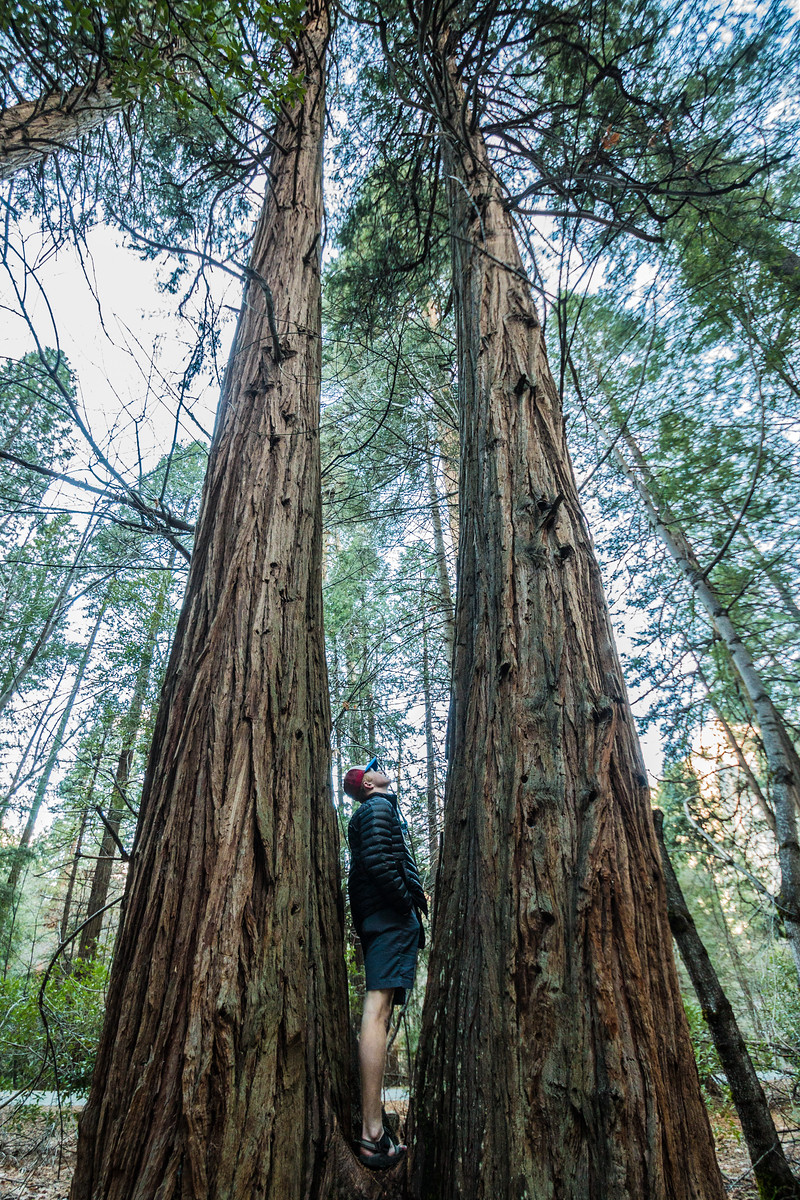 """""""Between every two pines is a doorway to a new world.""""  - John Muir"""