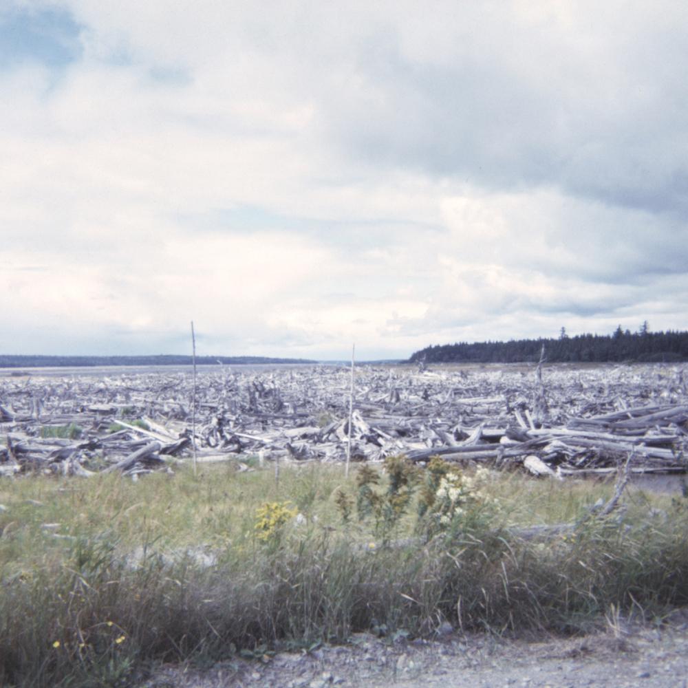 driftwood-lake.jpg