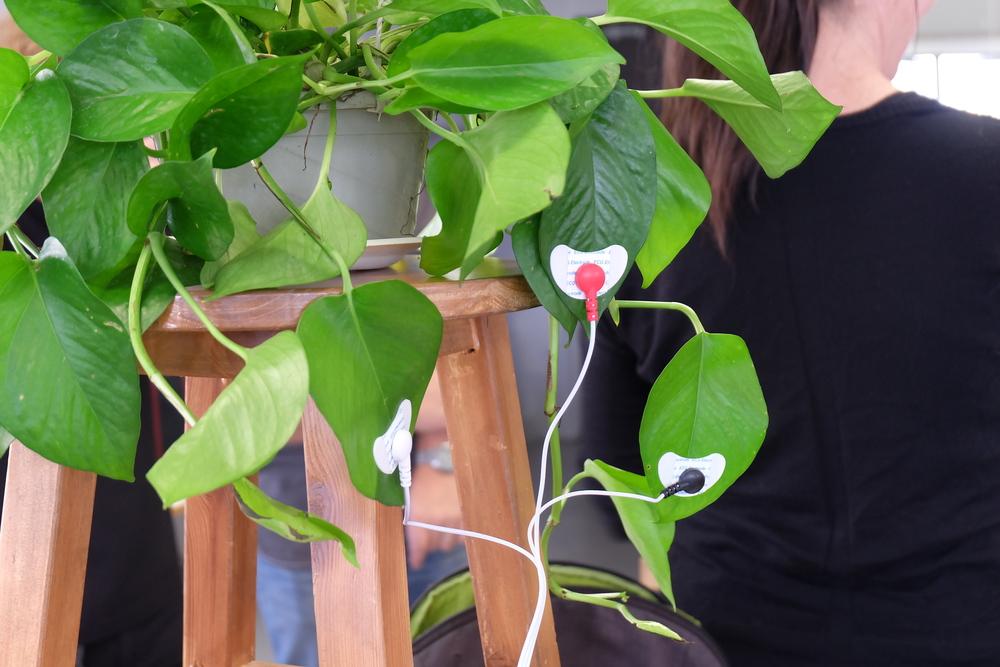plant sensing