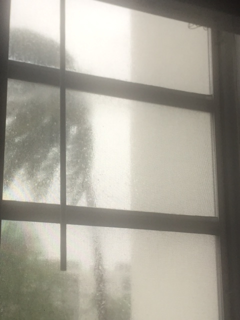 The view during Irma