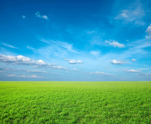 Green grass fable.jpg