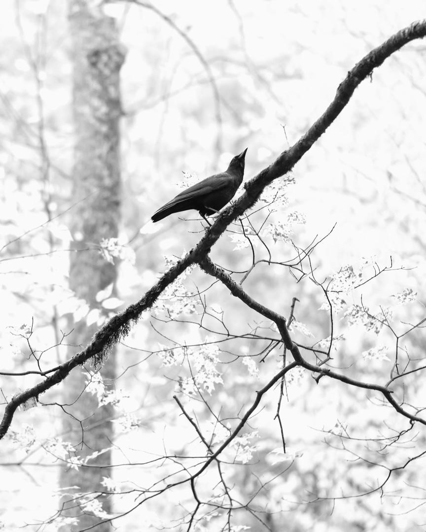BIRD LISTENING