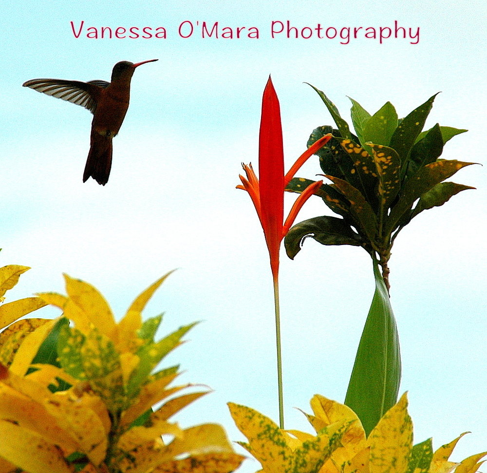 Vanessa O'Mara Photography