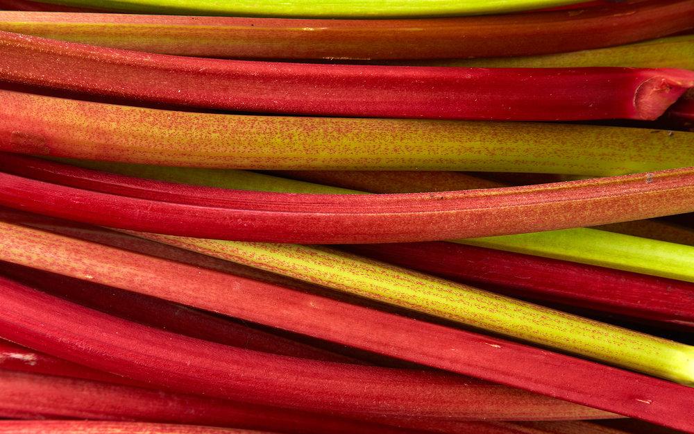 RhubarbDay4_ 0579.jpg