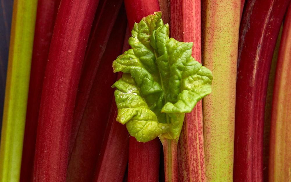 RhubarbDay4_ 0584.jpg