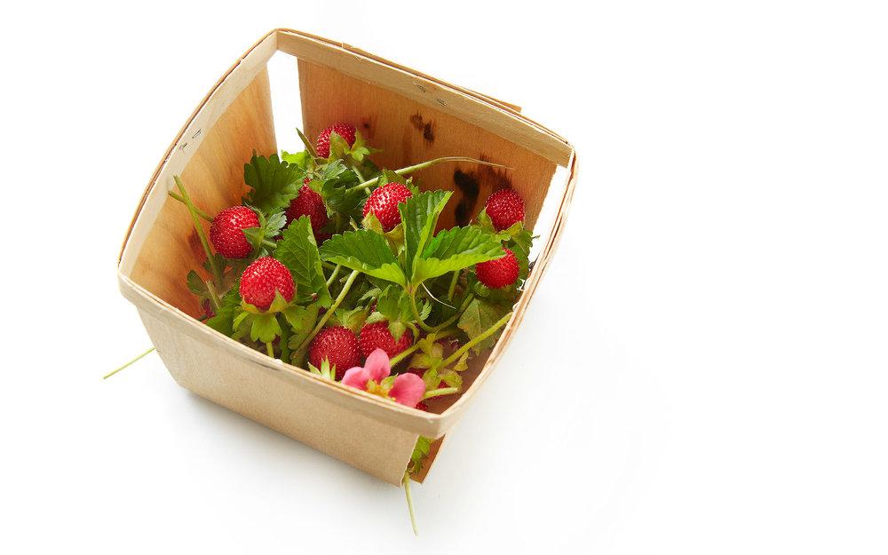 WildStrawberriesForStrwbrryRhbrbChptrMrkr.jpg
