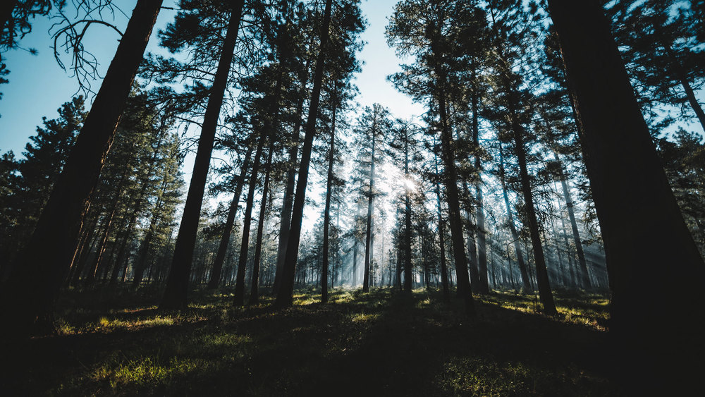 Think-to-make_PNW_Travel-Photography.jpg