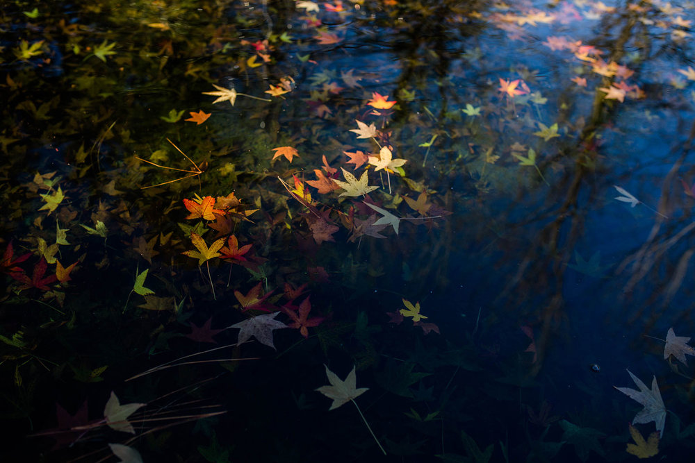Leaves in Water, Amy Wright Photography, Roseville Family Photographer