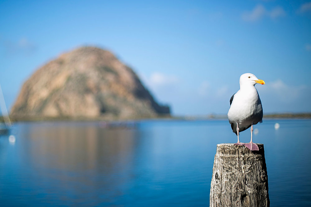 Morro Bay California, Amy Wright Photography