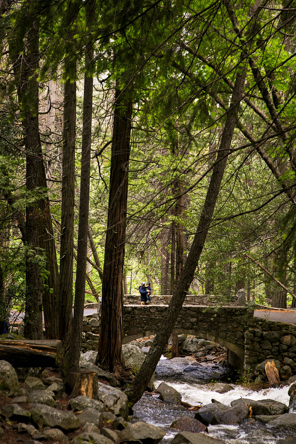 Yosemite National Park with kids, Amy Wright Photography, Sacramento Family Photographer