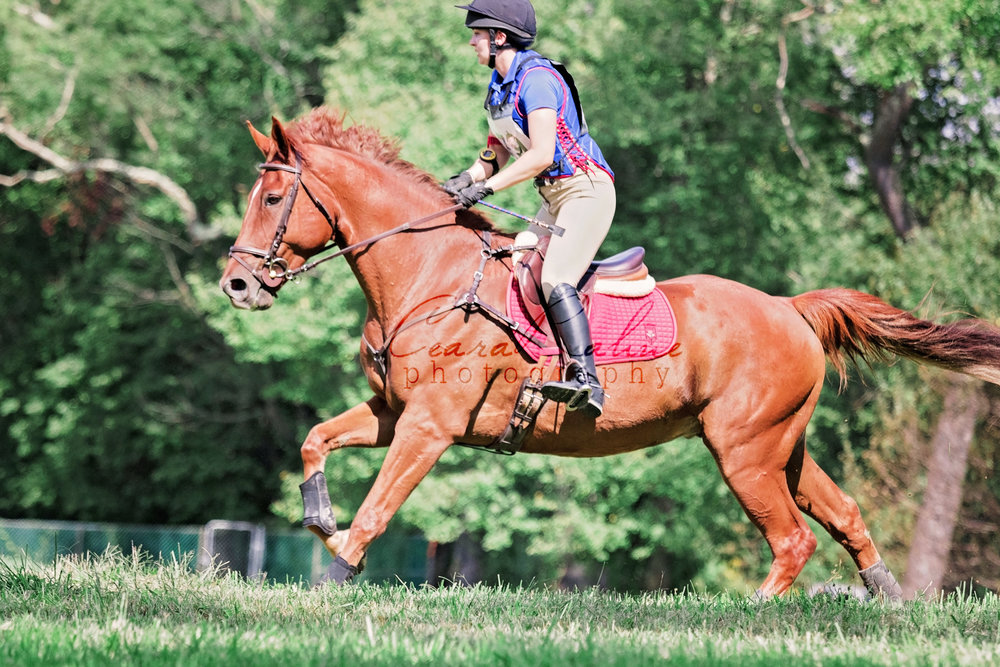 Horse Park of New Jersey 09/30/2018  © Ceara Rahne Photography